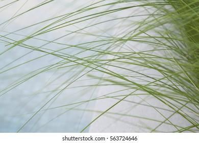 green long grass beside swimming pool
