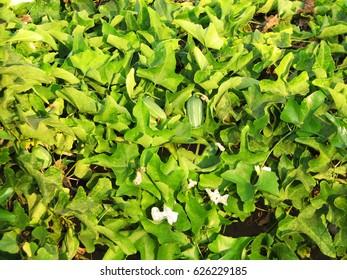 Green long leaves background Green, vegetative, tropical texture