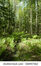 Green and lush forest in Finland in summer.