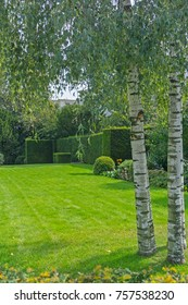 Green lush lawn and garden and group three silver birch trees in formal garden vertical background.