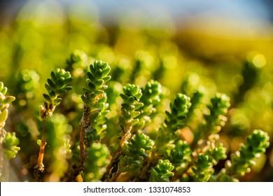 green macro, spring is coming