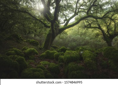 Green magic forest in the south os Spain