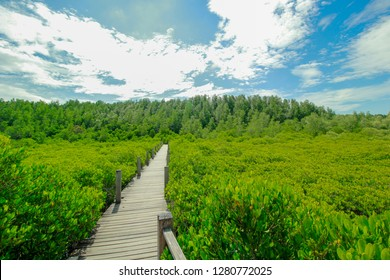 green mangrove field with pathway in Tung Prong Thong at Estuary Pra Sae, Rayong, Thailand. Is an eco-tourist, in the sea.