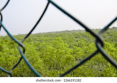 Green mangrove forest in sundarbans national park , West Bengal , India