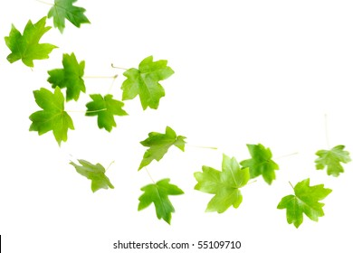 Green maple leaves falling and spinning isolated on white