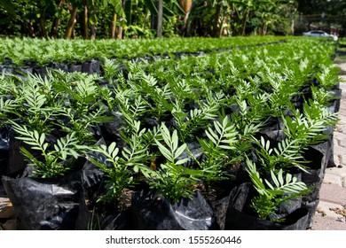 Marigold Seedlings Images Stock Photos Vectors Shutterstock