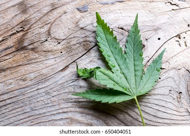 Green marijuana leaf over wood