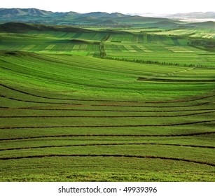 Green meadow in Bashang grassland, Chengde, China.
