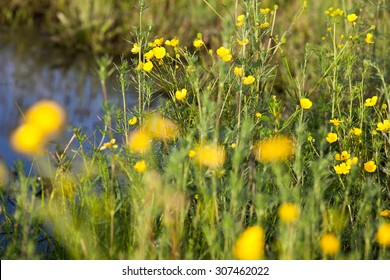Wildflower meadow images stock photos vectors shutterstock green meadow with blooming yellow buttercup flowers mightylinksfo