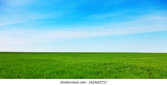 Green meadow with blue sky