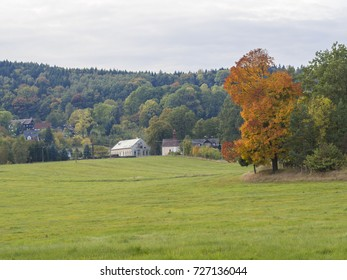 green meadow with colorful orange maple tree in village travnik in north czech republic in autumn