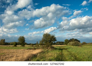 Green meadow, field stubble, road and bushes, white clouds on blue sky