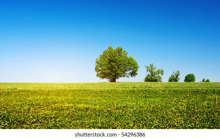 Green meadow with flowers and group of trees over clear blue sky background