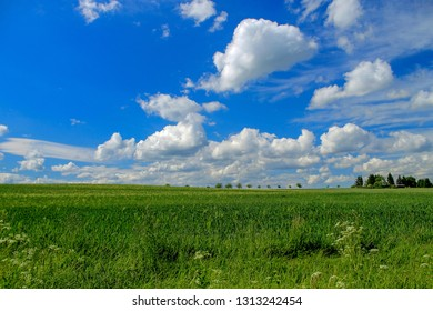 Green meadow and forth, blue sky