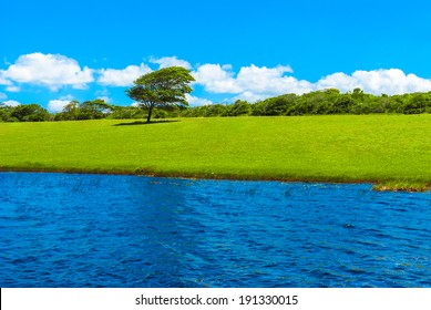 Green meadow of the Genipabu lagoon in Natal, Brazil