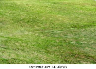 Green meadow grass field