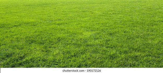 Green meadow grass field for football  - Shutterstock ID 190172126