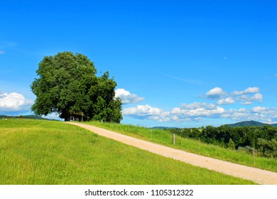 green meadow with a lonely tree on a sunny summerday
