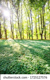 A green meadow near the bicycle road and tall green trees on a clear summer day. Sunlight through the tree trunks, shadows on the ground. Environmental conservation, recreation theme. Riga, Latvia