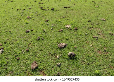 Green meadow off the coast of the Indian Ocean. Cow shit on a green lawn. Tropical Bali island with sea in background. Tropical vegetation.