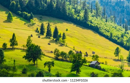 Green meadow on a hill surrounded by forests