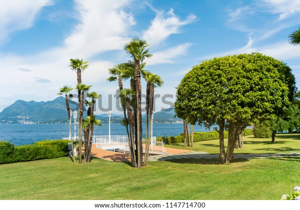 Green Meadow with Palms and Green Trees