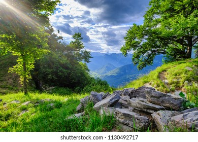 Green meadow in Slovenia mountains. Socha valley, Kolovrat. Shot with lens flare