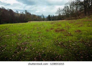 a green meadow with some dead leaves on the ground