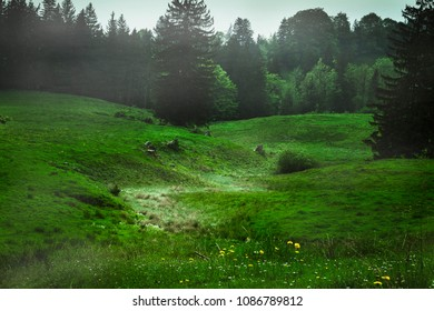 A green meadow with some mist in the background and a dried up riverbed, which is covered with bright grass. Recorded in Germany.