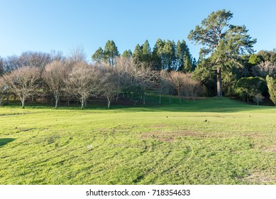 Green meadow with some trees under a clear blue sky