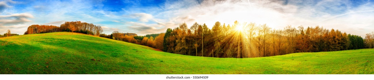 Green meadow with sun and forest in the background