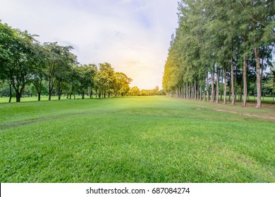 Green meadow, trees and blue sky