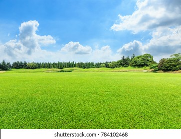 green meadow and trees landscape in the nature park,beautiful summer season