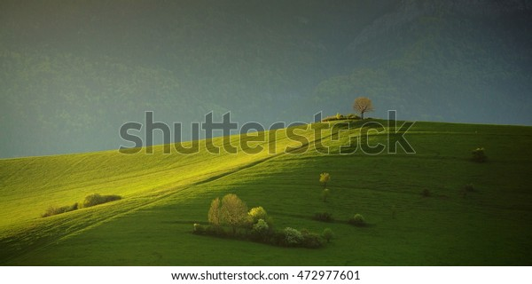 Green meadow with trees lit by last rays of of the sunset - Slovak Republic. Green meadow with trees. Two trees located at the top of a grassy field.