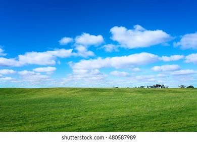 Green meadow  with trees under blue sky with clouds