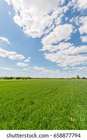 Green meadow under blue sky with clouds. Nature landscape.