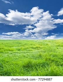 green meadow under nice sky