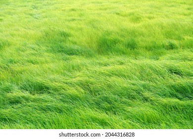 Green Meadow in the wind breeze rural scene day time