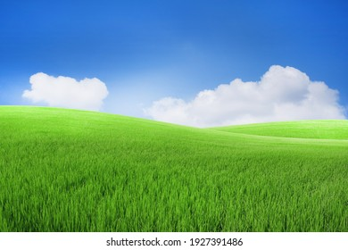 Green meadows with blue sky and clouds background.