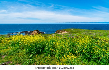 Green meadows and cliffs above blue Pacific Ocean California coast sandy beach and tropical landscape of west coast beauty