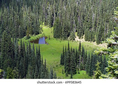 Green meadows downslope from Sunrise in Mount Rainier National Park,  Washington