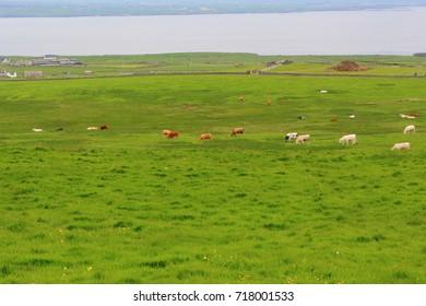 Green meadows of Ireland