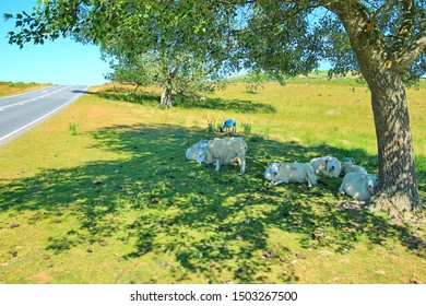green meadows and sheep in Wales