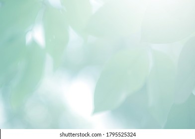 Green Mint background. Leaf blurred. The bokeh circle from the leaves with light shining through. Abstract background.