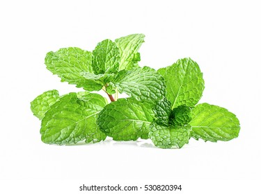 Green Mint leaf green plants isolated on white background, peppermint aromatic properties of strong teeth and fresh ivy as a ground cover plant types