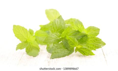 green mint leaf, studio shot
