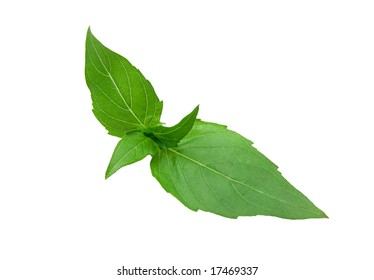 Green mint leaves (isolated)