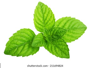 Green mint leaves isolated on a white background.
