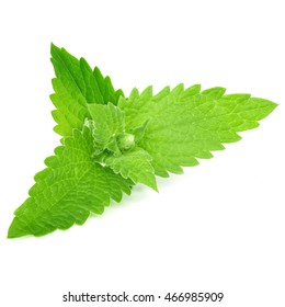 Green mint leaves isolated on white background
