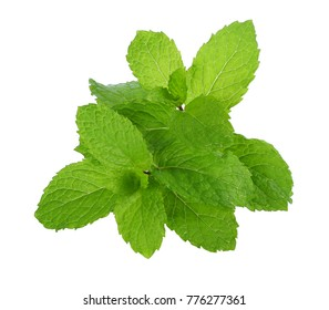 Green Mint leaves isolated on white background, Top view.